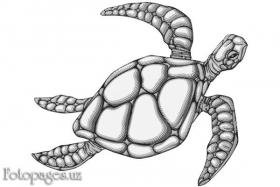Черепаха - фото