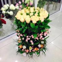 Цветы Ташкента на фото