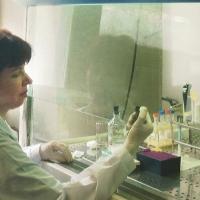 Immunogen Test - фотография